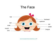 Facial Features Worksheets